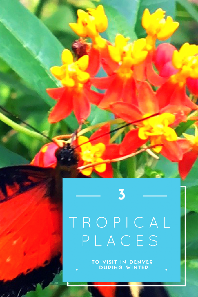tropical places in Denver