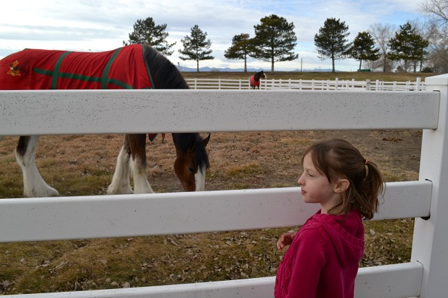 Visit the Budweiser Clydesdales in Fort Collins