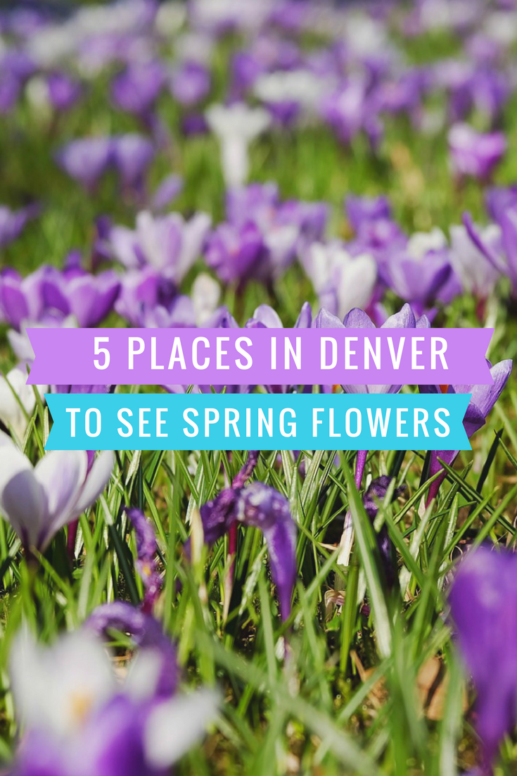 Shake off the winter doldrums and head to these 5 kid-friendly places to see spring flowers in Denver! #kids #kidsactivities #gardening #gardens #denver #colorado