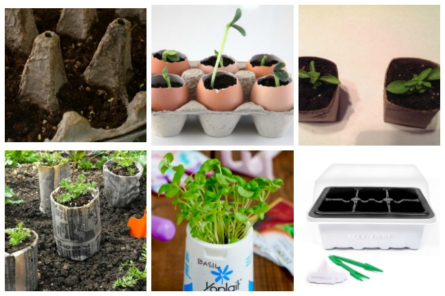 8 ways to start seedlings indoors